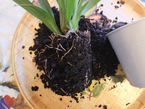 грунт с корнями