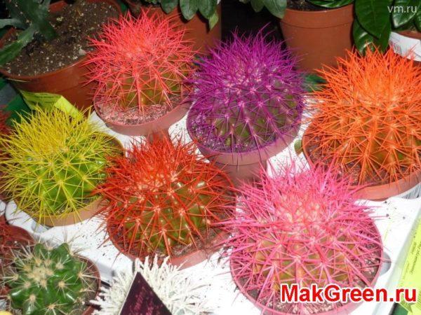 кактус шарик