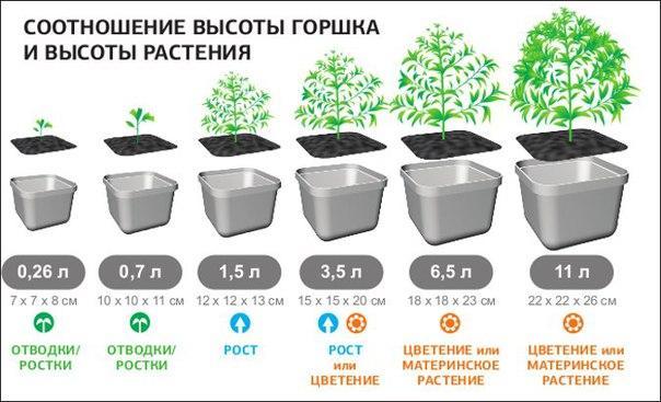 размеры горшка и растения