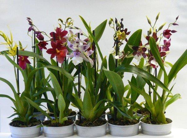 различные виды орхидей