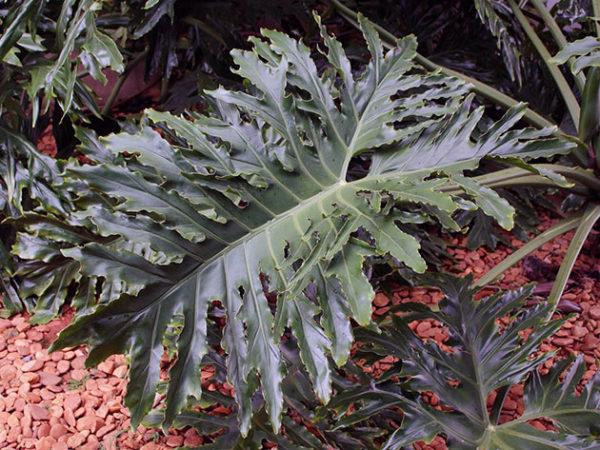 правильная пересадка растения