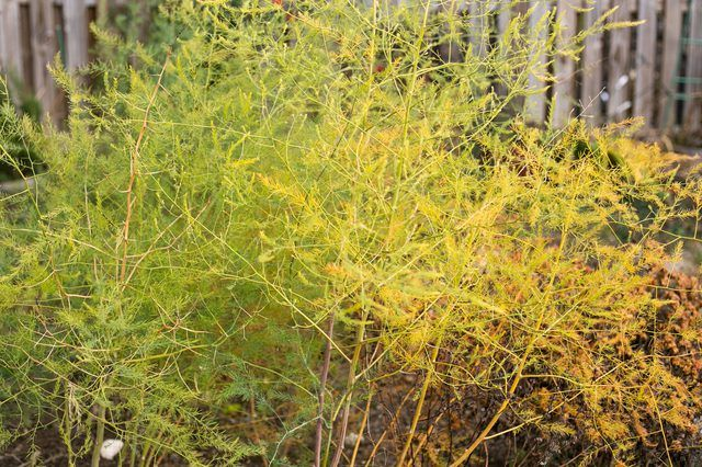 желтые листья