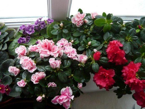 влажность для комнатных растений