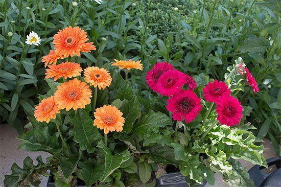 кусты с цветами