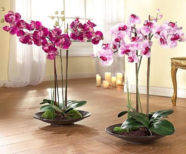 Орхидея цветов уход в домашних условиях