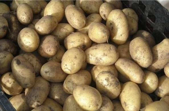 картофель и топинамбур