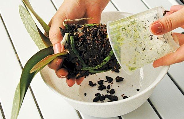 Извлечение растения