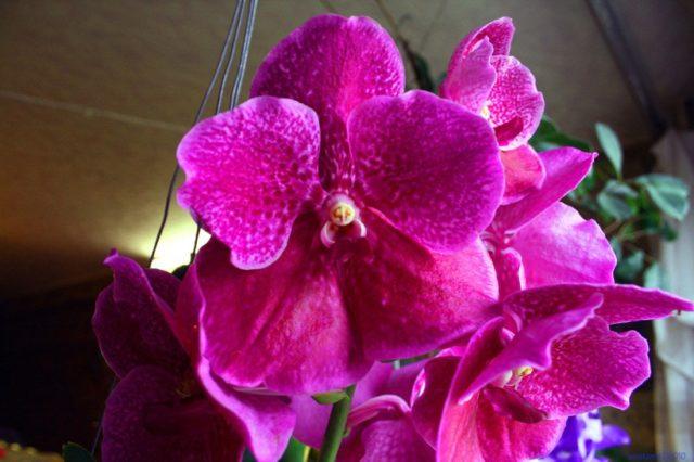 влияние орхидеи на дом