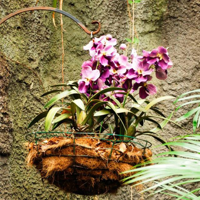 корзинка для орхидеи