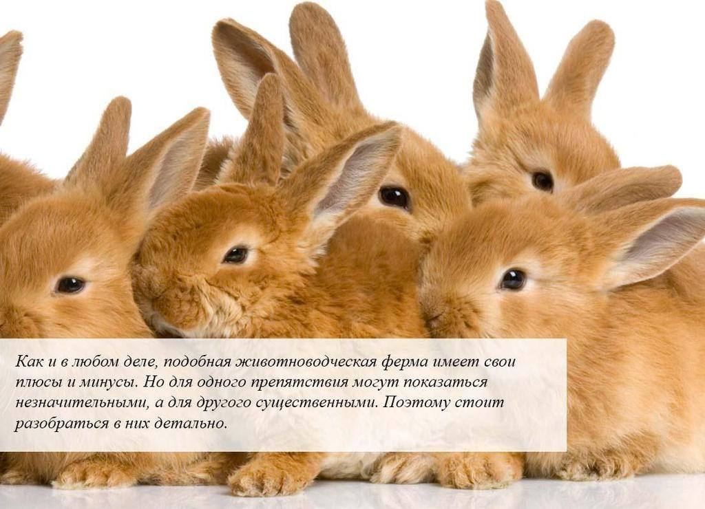 кролики 1