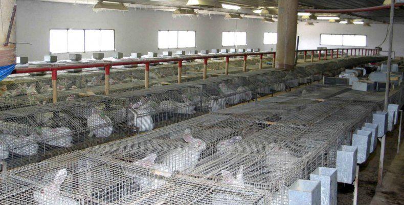 ферма кролиководства