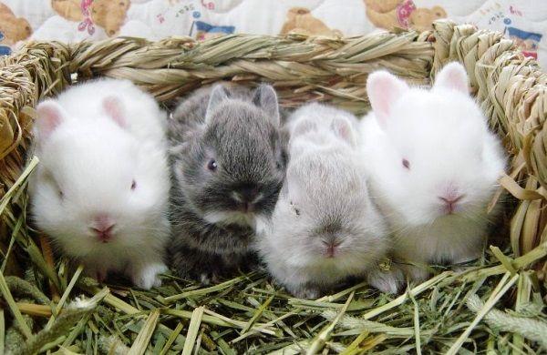 четверо крольчат
