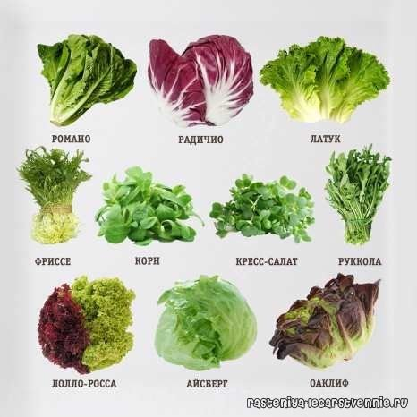 схема разновидностей зелени