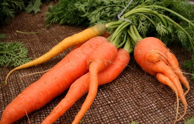 Посадка моркови под зиму - как и когда правильно сажать