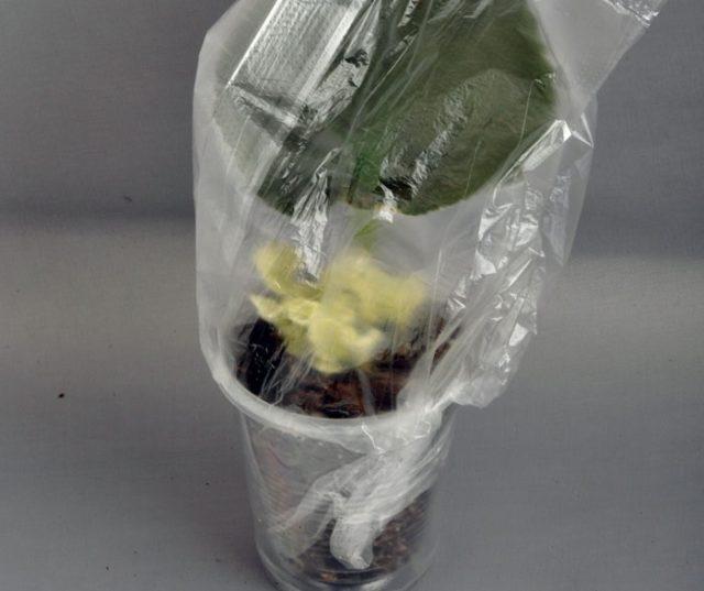 Правильное выращивание лучших сортов фиалок из листа