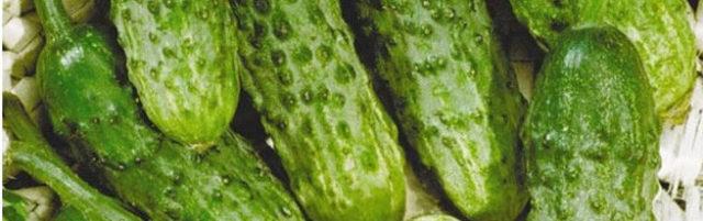 Как собирать и заготавливать семена огурцов самостоятельно