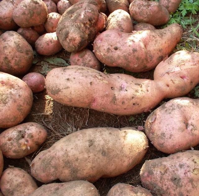 картошка повинь фото сайт предлагает вам