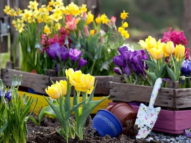 Подходящее время для посадки тюльпанов осенью