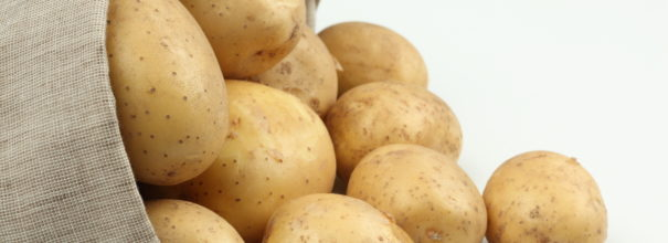 Удача картофель – описание и характеристики сорта   видео